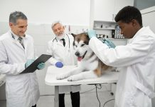 Best Veterinarians in New York