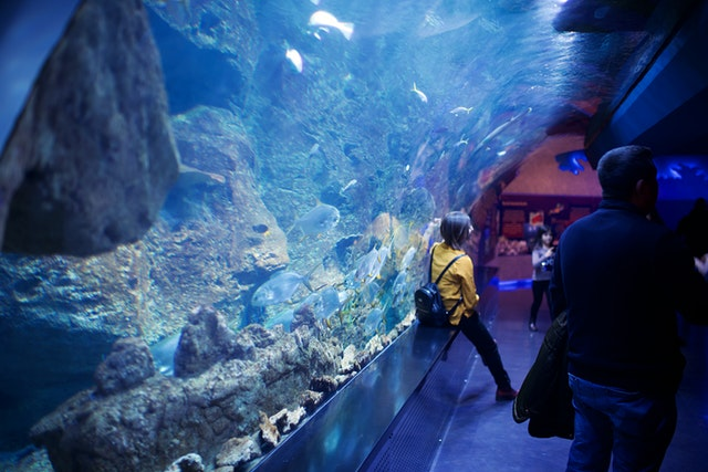 Best Aquariums and Zoos in New York