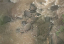 Five more Thailand elephant deaths spotted by drone