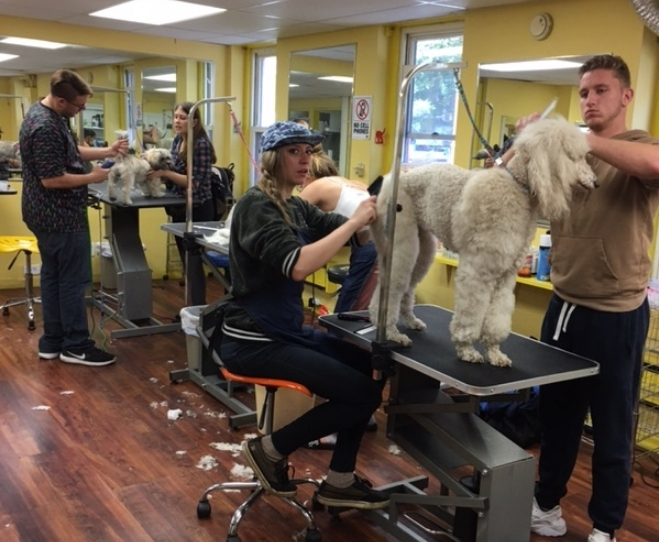 American Academy of Pet Grooming