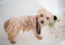 Best Dog Grooming in Chicago