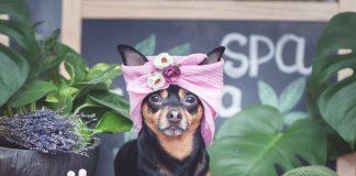 Best Dog Grooming in Los Angeles