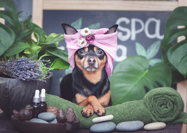 Best Dog Grooming in Los Angeles