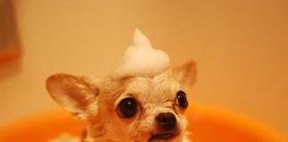 Best Dog Grooming in San Jose