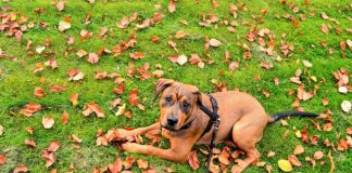 Best Doggy Day Care Centres in New York