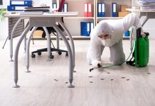 Best Pest Control Companies in Los Angeles