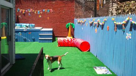 Buddy's Dog Den