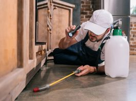 Pest Control Companies in New York