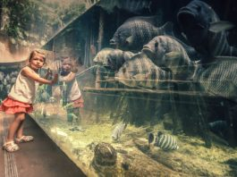 Best Aquariums and Zoos in Chicago