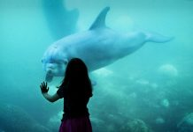 Best Aquariums and Zoos in Dallas