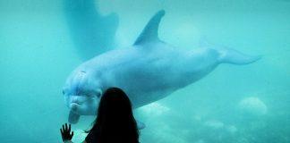 Best Aquariums and Zoos in Dallas