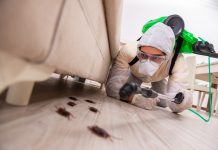 Best Pest Control Companies in Chicago