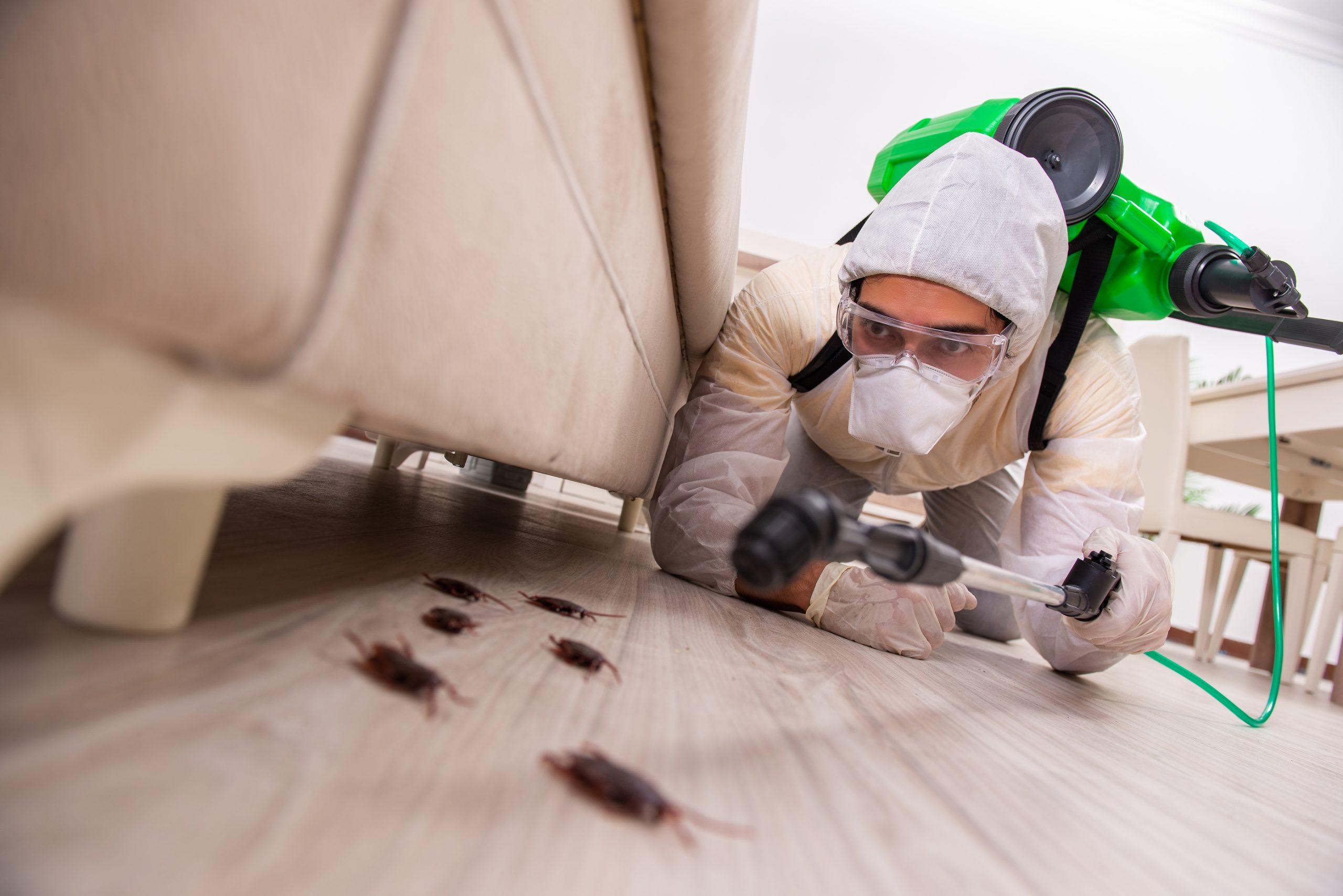 Various Kinds of Pest Control