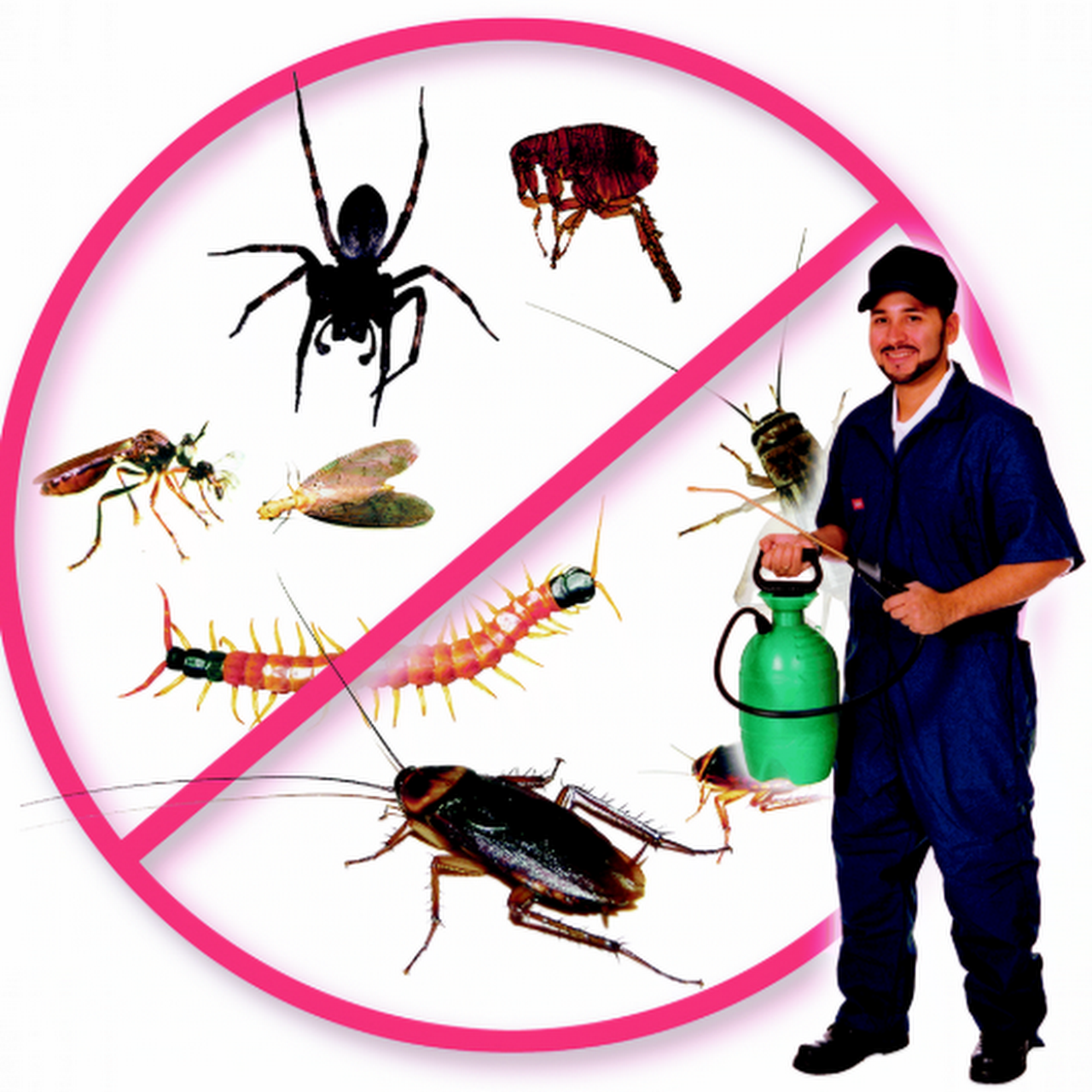 Superior San Jose Exterminators
