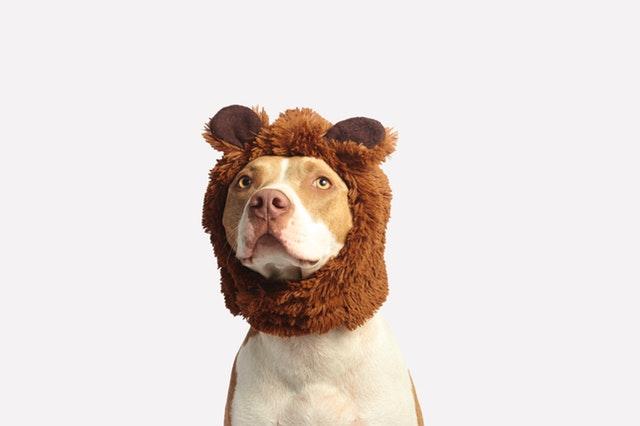 5 Best Pet Shops in Dallas