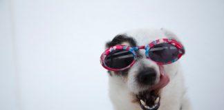 5 Best Doggy Day Care Centre in Dallas