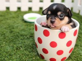 5 Best Doggy Day Care Centre in San Jose
