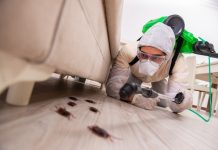 5 Best Pest Control Companies in Dallas