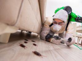 5 Best Pest Control Companies in Dallas