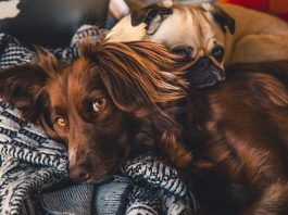 5 Best Pet Care Centre in New York