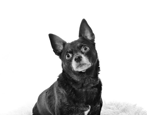 Itty Bitty's Doggy Daycare