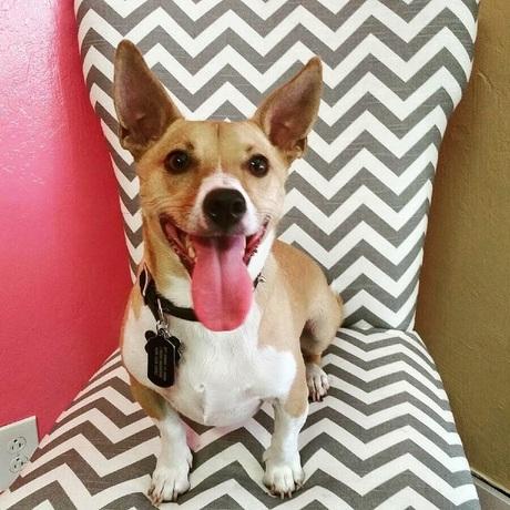 Nikki's Dog House Dog Daycare