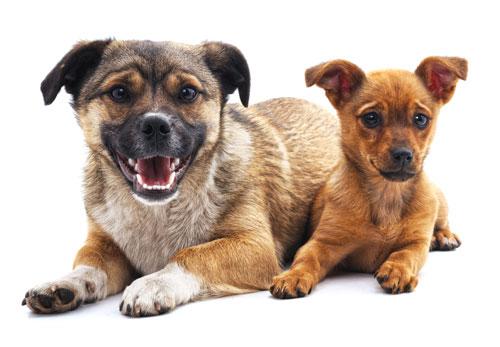 Oh Hello Dog: DTLA Dog Daycare & Boarding