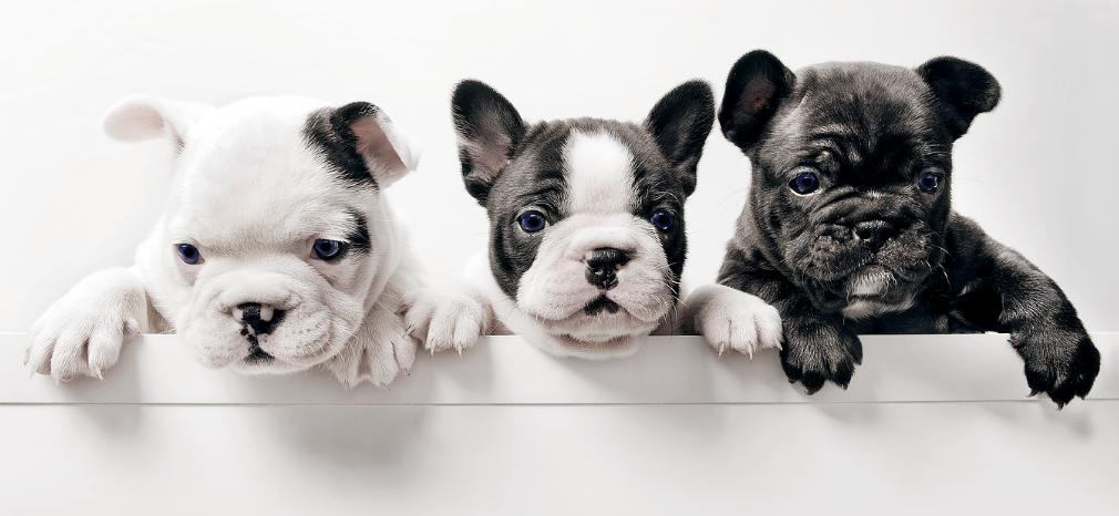 The Pupper Club