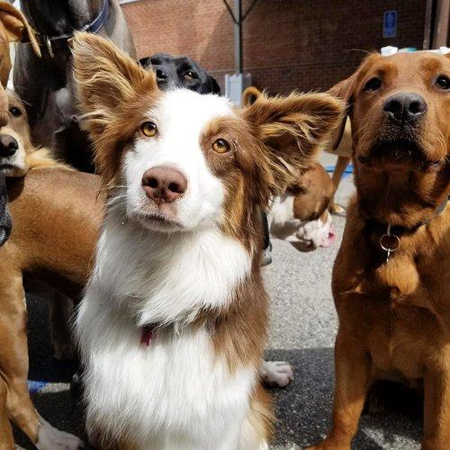 West LA Dogs