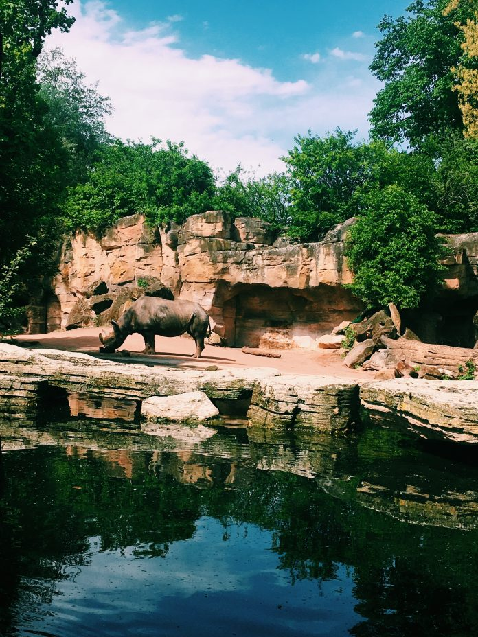 5 Best Aquariums and Zoos in Fort Worth