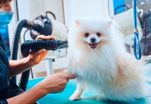 5 Best Dog Grooming in Indianapolis