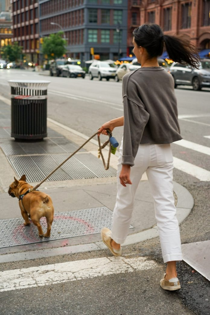 5 Best Dog Walkers in Austin