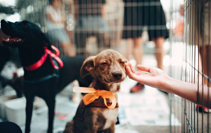 5 Best Doggy Day Care Center in Columbus
