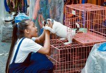 5 Best Pet Shops in Jacksonville