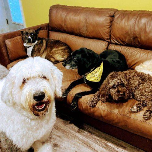 Circle City Pet Care
