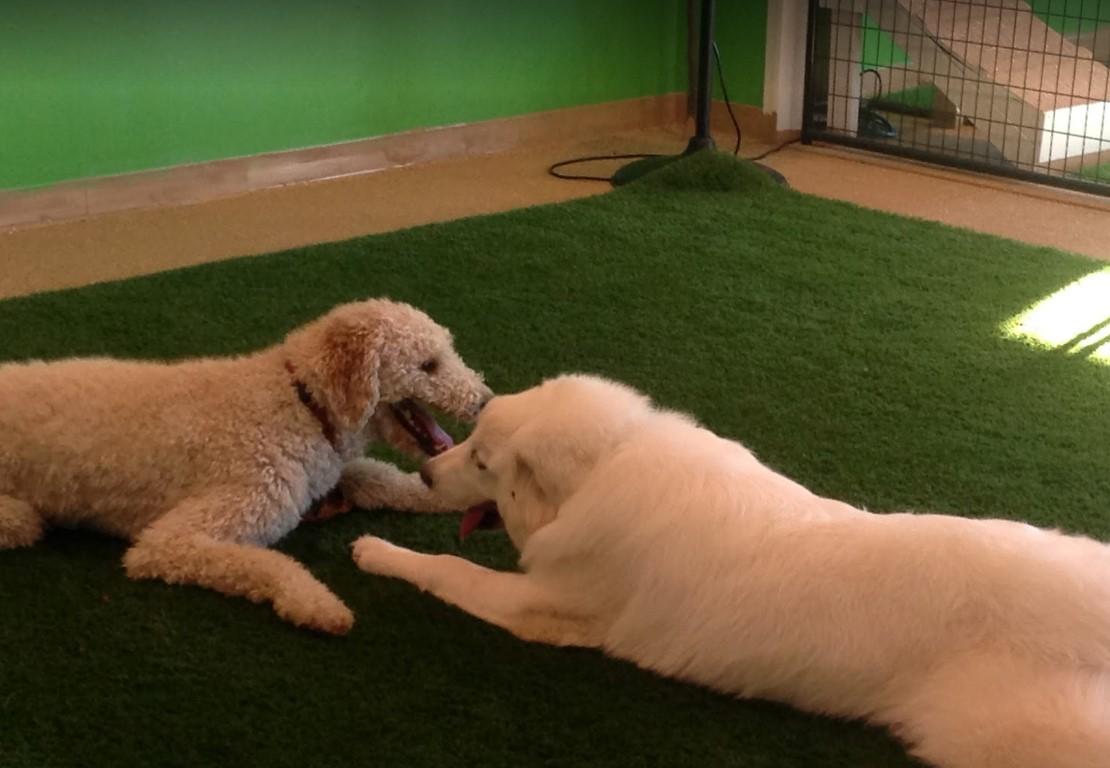 I. B. Spoiled Doggy Daycare