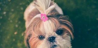 5 Best Dog Grooming in Phoenix