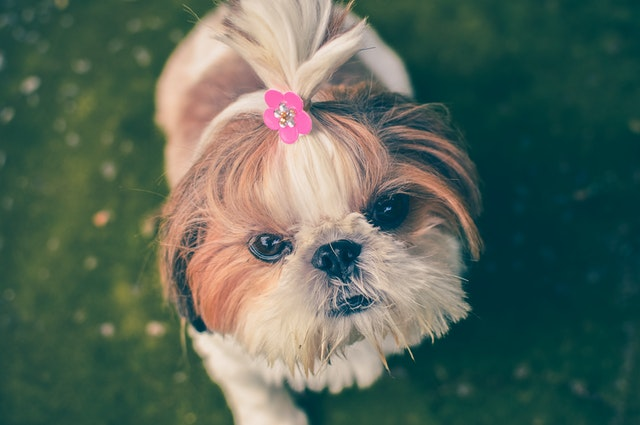 5 Best Dog Grooming in Phoenix