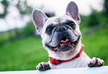 5 Best Doggy Day Care Centre in Charlotte