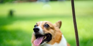 5 Best Doggy Day Care Centre in Indianapolis