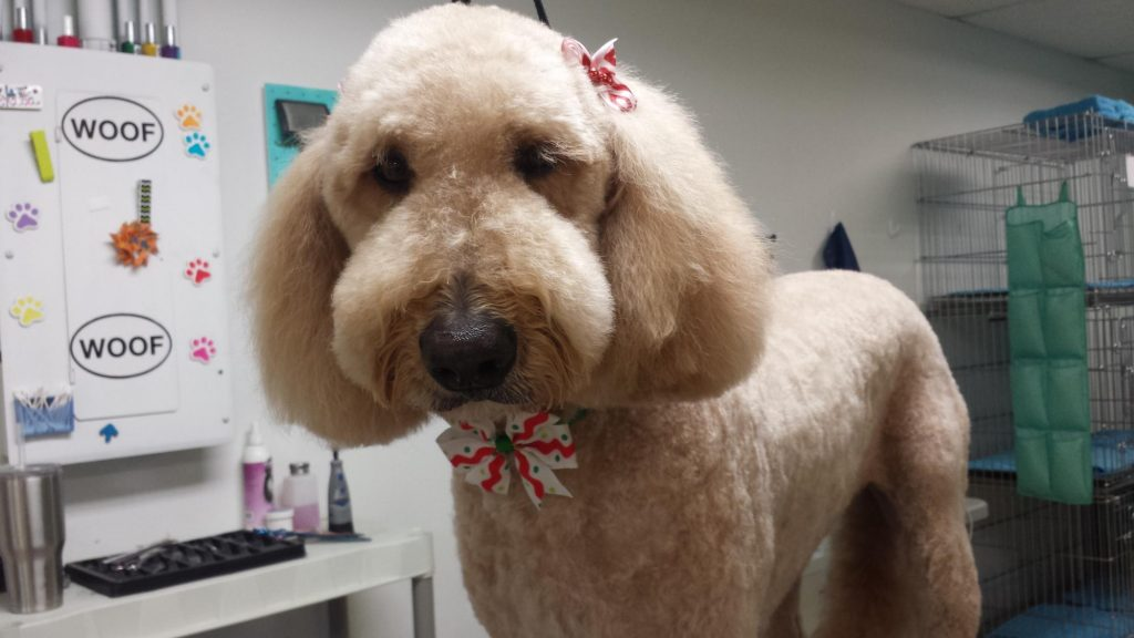Clip&Care Dog Grooming