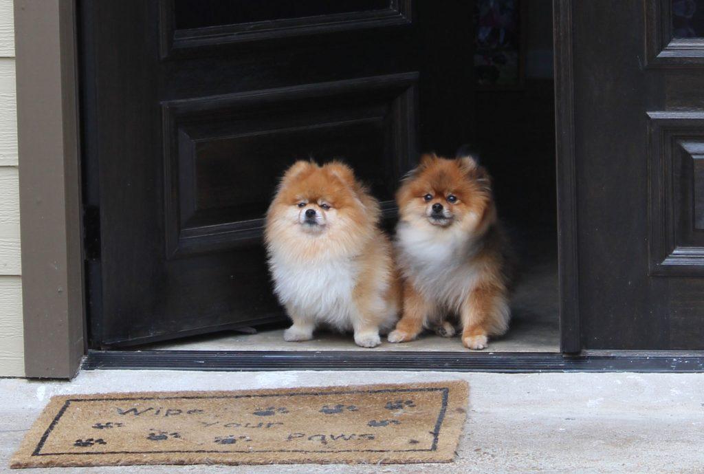 Furrytails Dog Grooming
