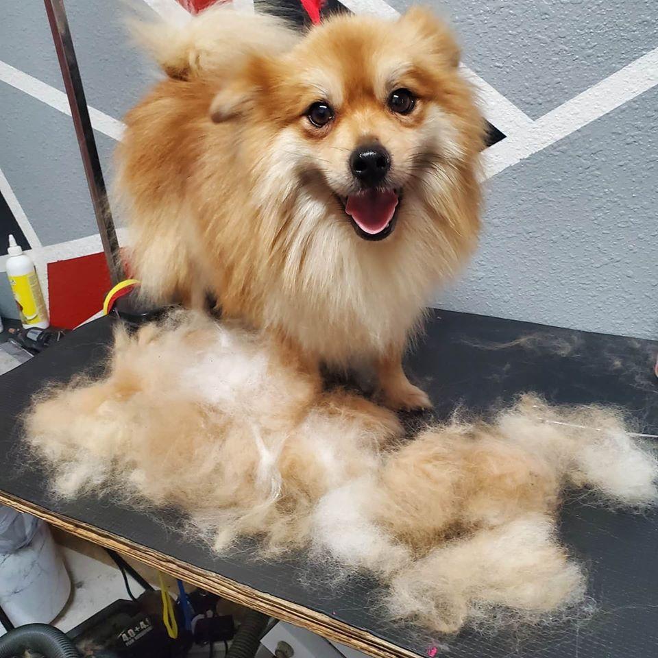 Nenas Dog Grooming