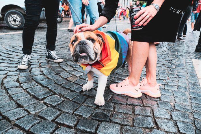 5 Best Dog Walkers in Charlotte