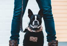 5 Best Dog Walkers in Indianapolis