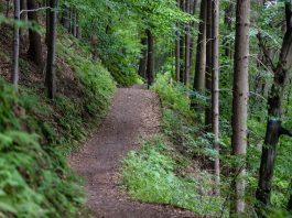 5 Best Hiking Trails in San Diego
