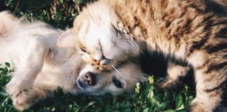 5 Best Pet Care Centre in Indianapolis