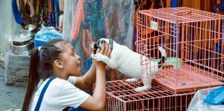 5 Best Pet Shops in Austin