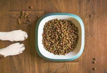 5 Best Pet Shops in Columbus