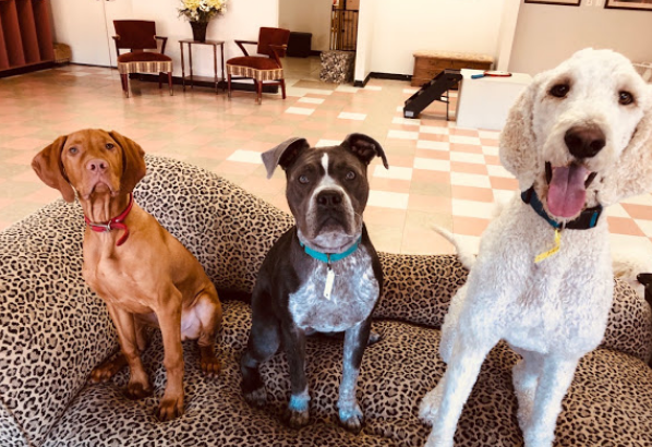 Grand Canine Hotel